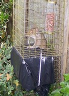 Elgeeco Fence and Tree Mountable squirrel trap with refuge cage